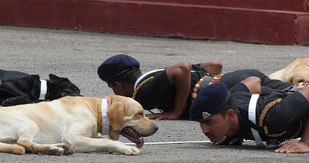 Republic Day special : Indian Army Dogs